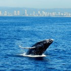 whalewatching5
