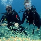 great-barrier-reef-cairns-scuba-diving-550x260