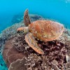 snorkel-with-turtles-mattguestcom