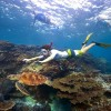 snorkelling-with-turtle-tourism-australia
